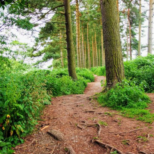 footpatch in woodland, North York Moors