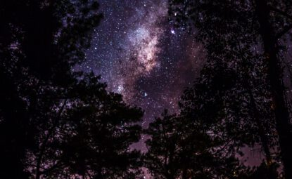 View of starry sky through woodland trees